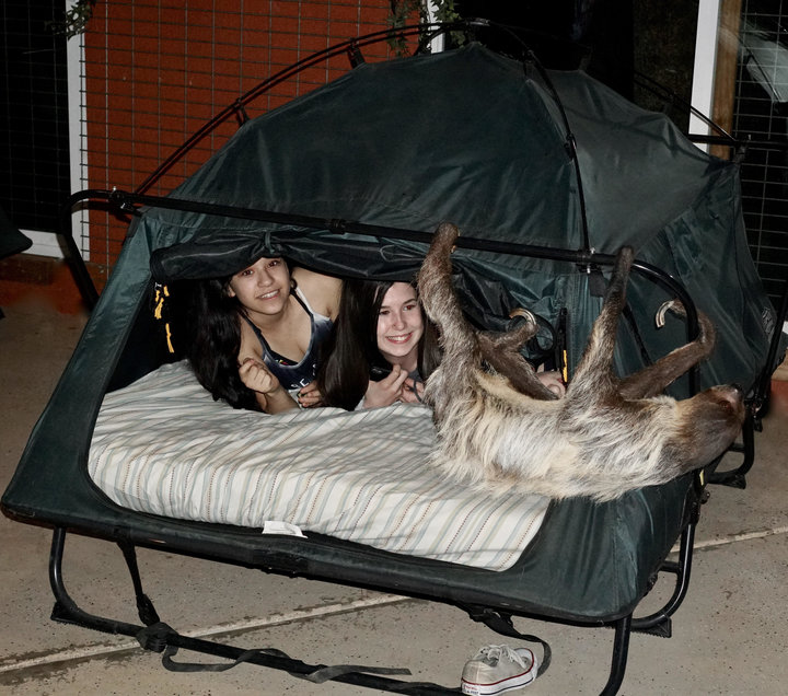 В США можно провести ночь среди ленивцев.Вокруг Света. Украина