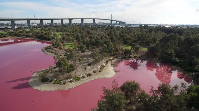 Ярко-розовое озеро в Австралии.Вокруг Света. Украина