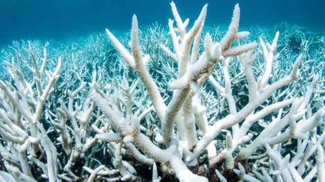 Глобальное потепление убивает морские кораллы.Вокруг Света. Украина