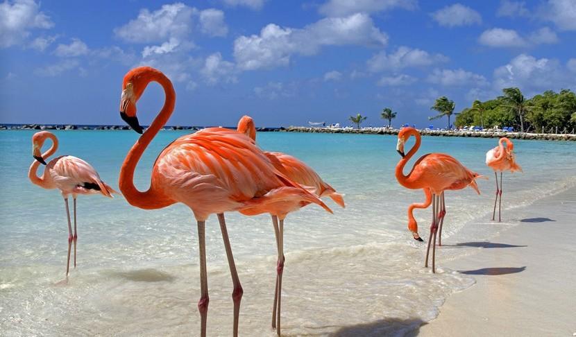 Дефиле розовых фламинго