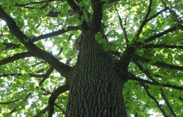 Фото: www.krasivye-mesta.com