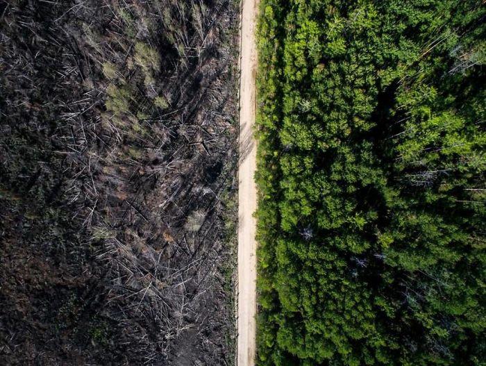 Лес спасен от огня