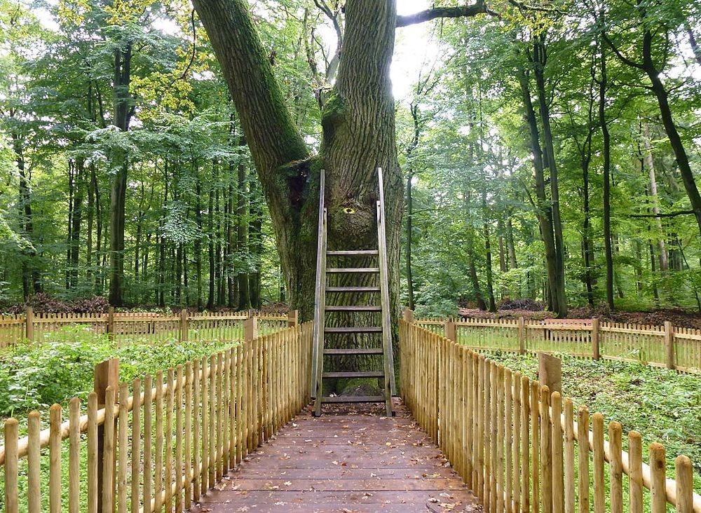 Дерево, которое помогает встретить любовь