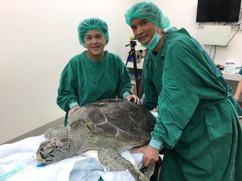 Хирурги извлекли 915 монет из желудка черепахи