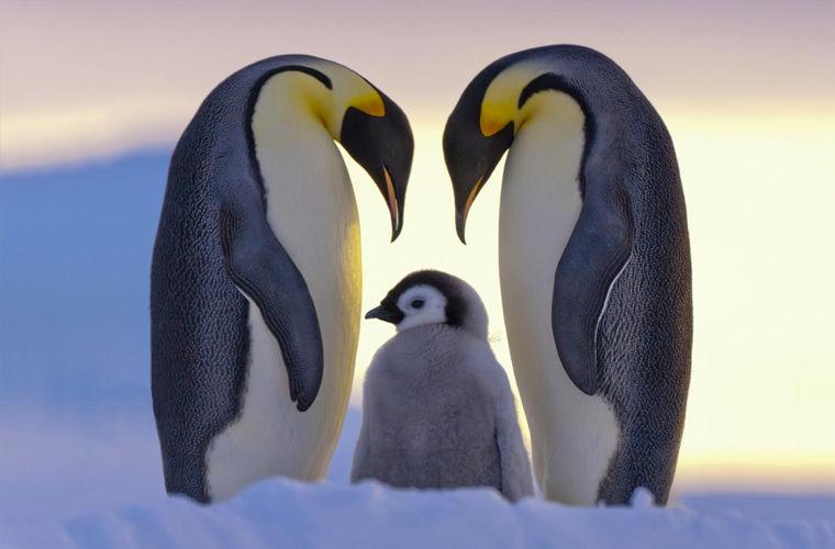 Примерные отцы из мира животных