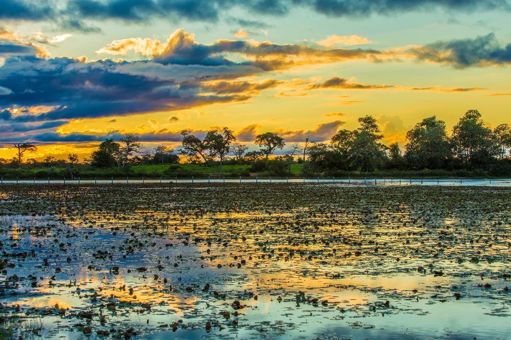 Пантанал – самое большое и прекрасное болото на планете.Вокруг Света. Украина