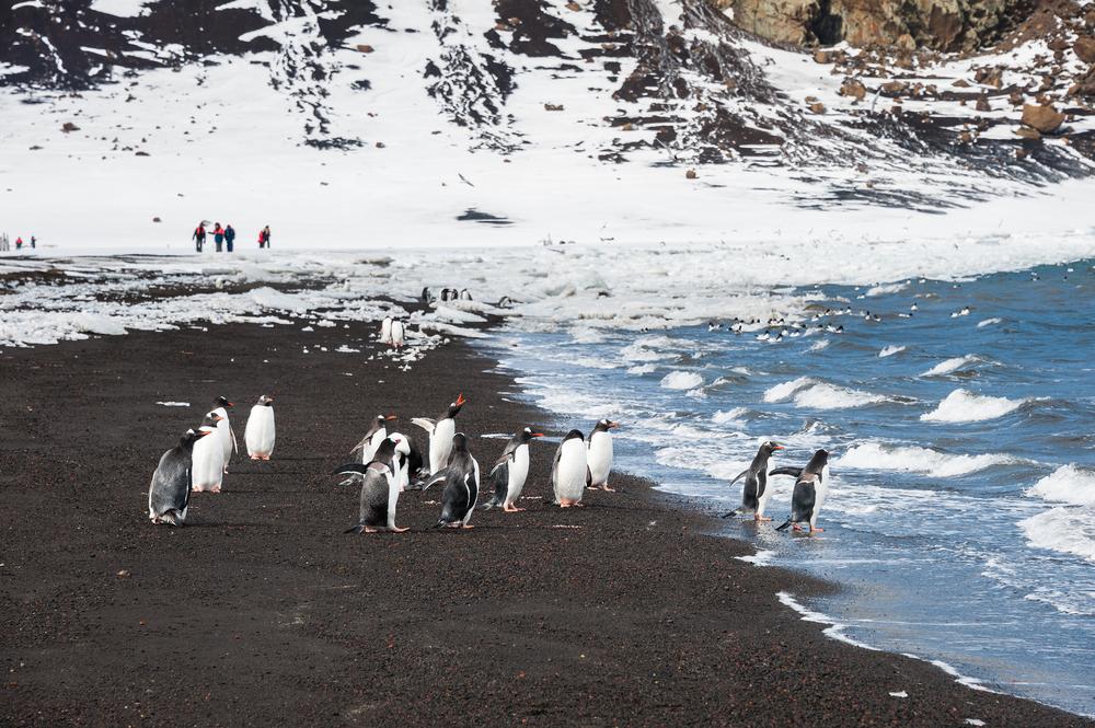 Круизы в Антарктиду: о чем вы не подозреваете.Вокруг Света. Украина