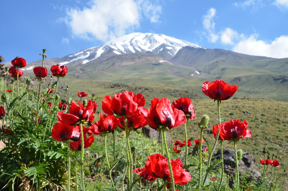 Сизда Бе-дар (День природы) в Иране