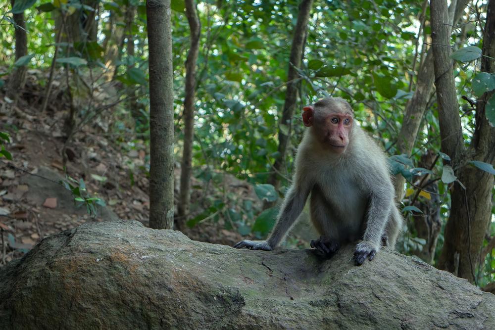 Потерявшийся в джунглях турист рассказал, что от смерти его спасли обезьяны.Вокруг Света. Украина