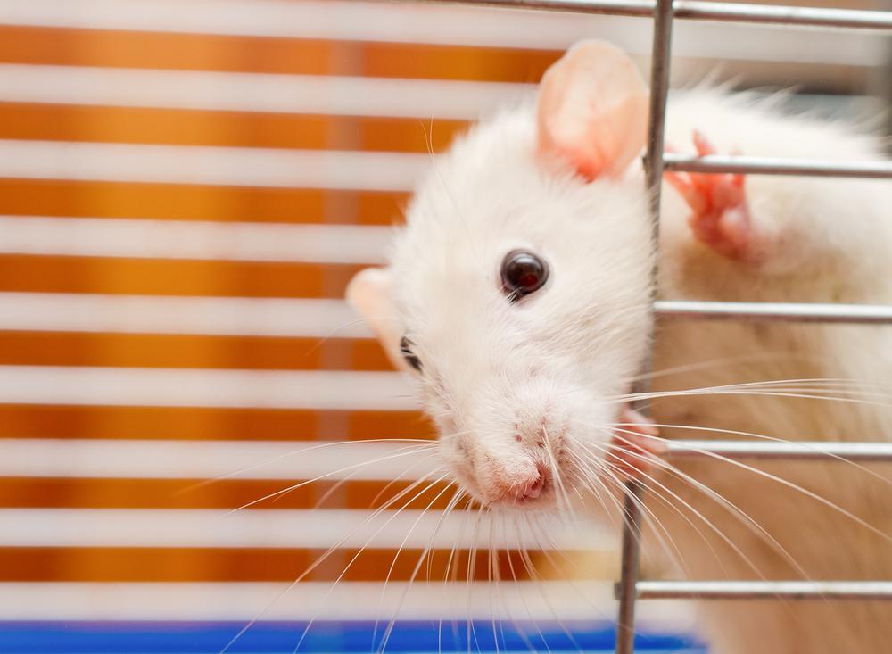 В Лондоне на 4 часа задержали рейс из-за мыши