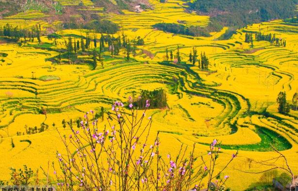 Фото: images.china.cn
