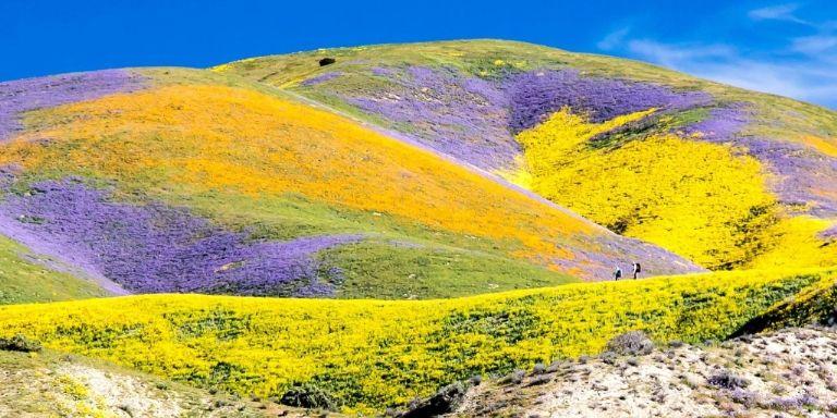 Краски весны в Калифорнии