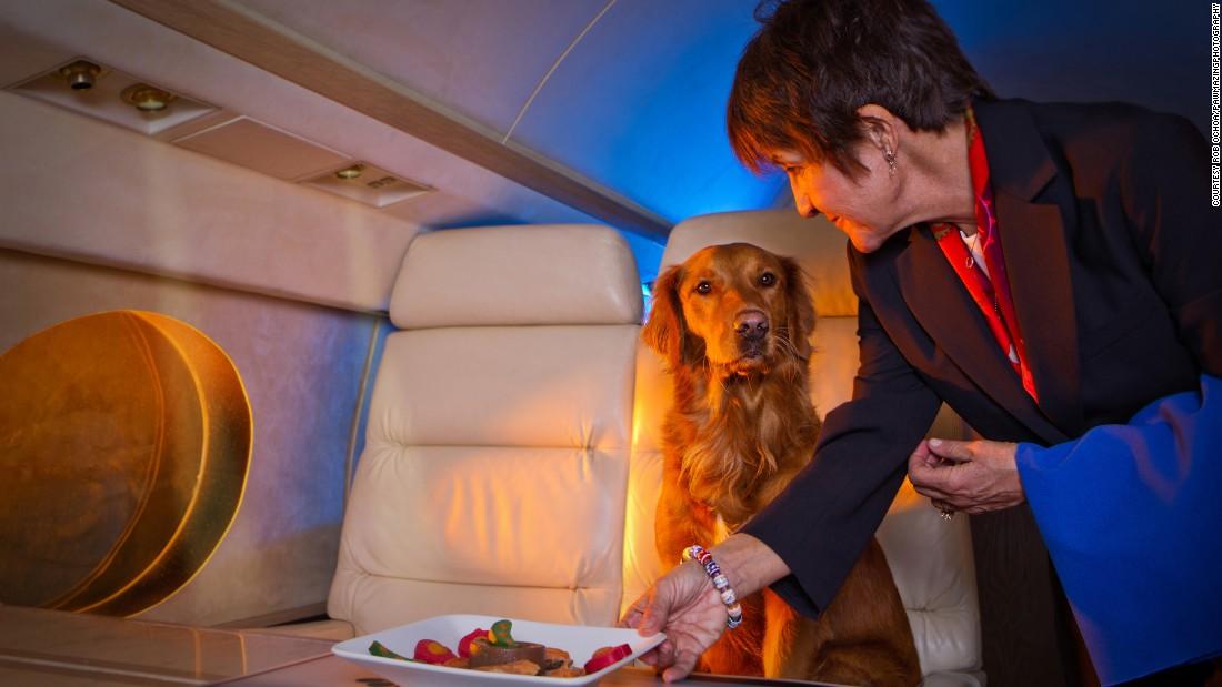 Рейсы для соколов и панд: как животные летают в самолетах.Вокруг Света. Украина