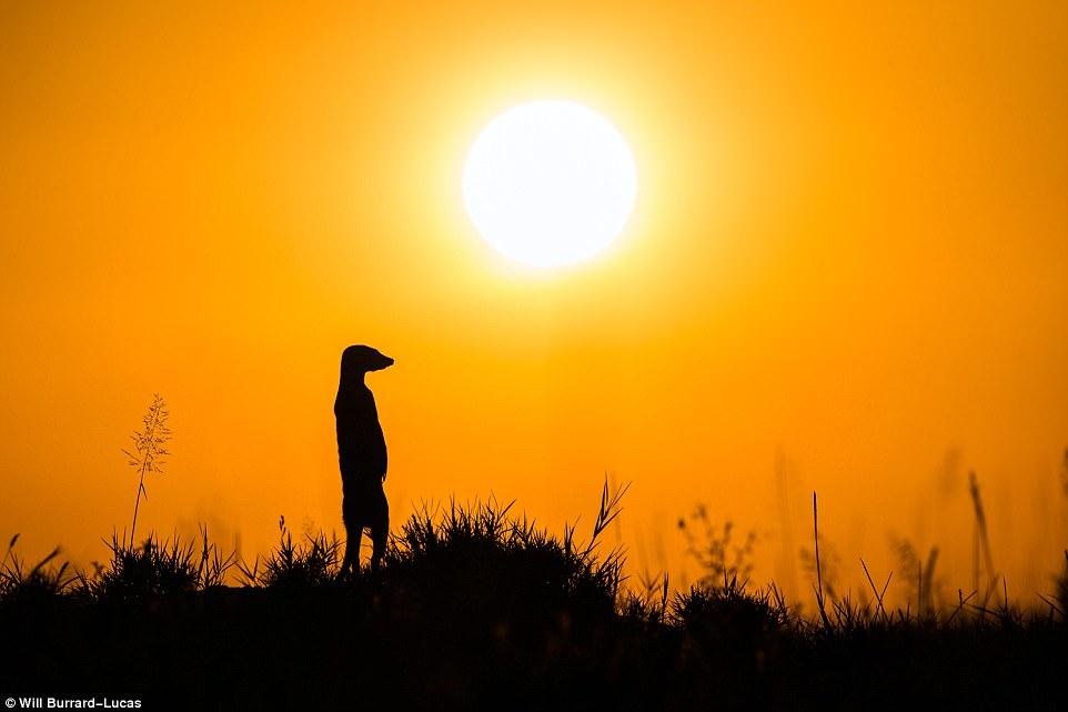 В Африке на закате
