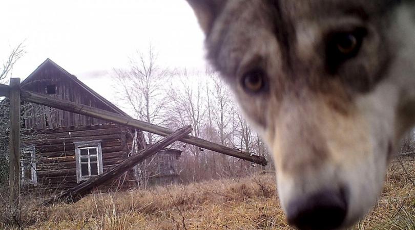 Приятный сюрприз: чем поразила ученых Чернобыльская зона.Вокруг Света. Украина