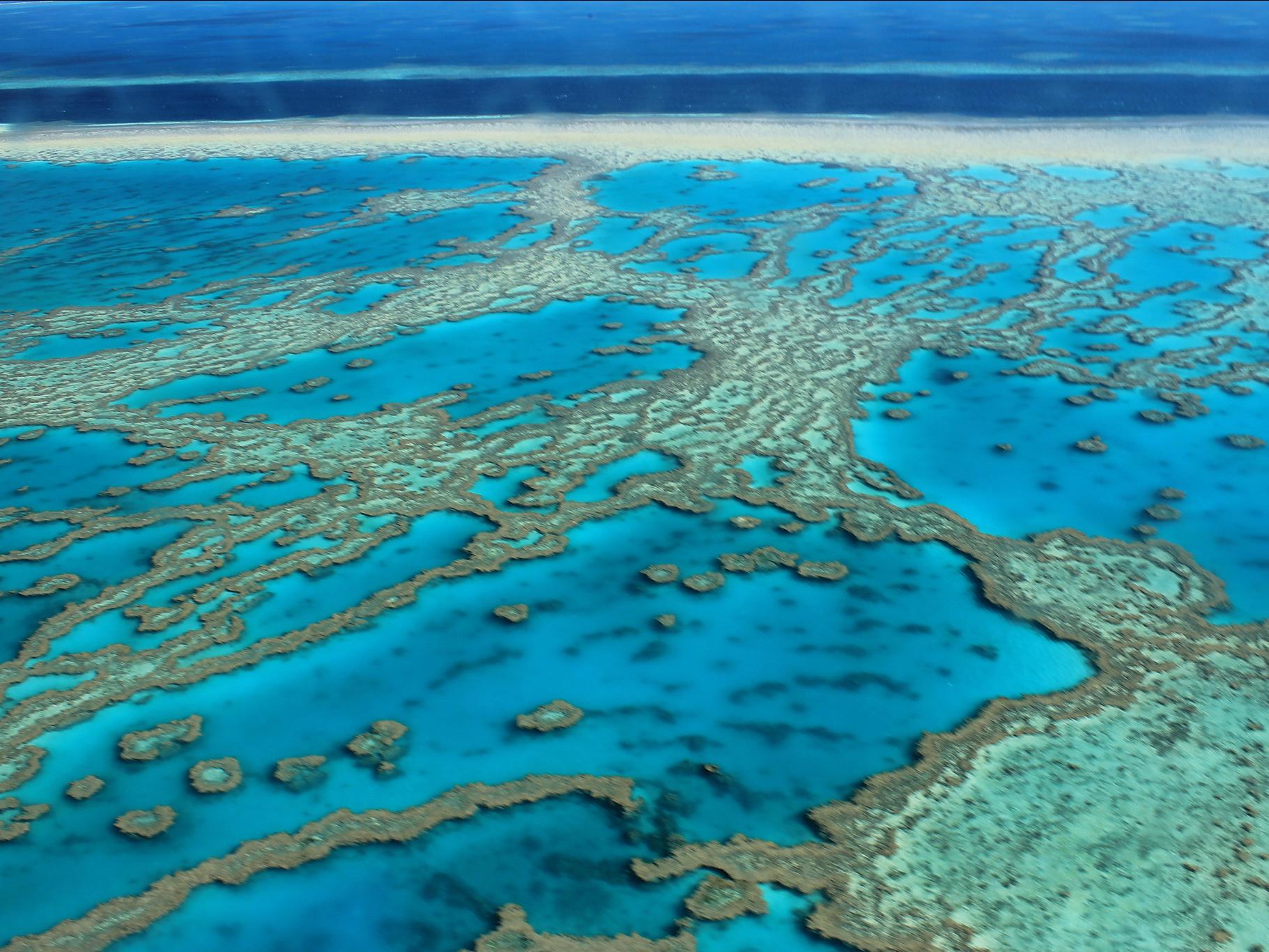 Две трети Большого Барьерного рифа «сварились» в горячем океане.Вокруг Света. Украина