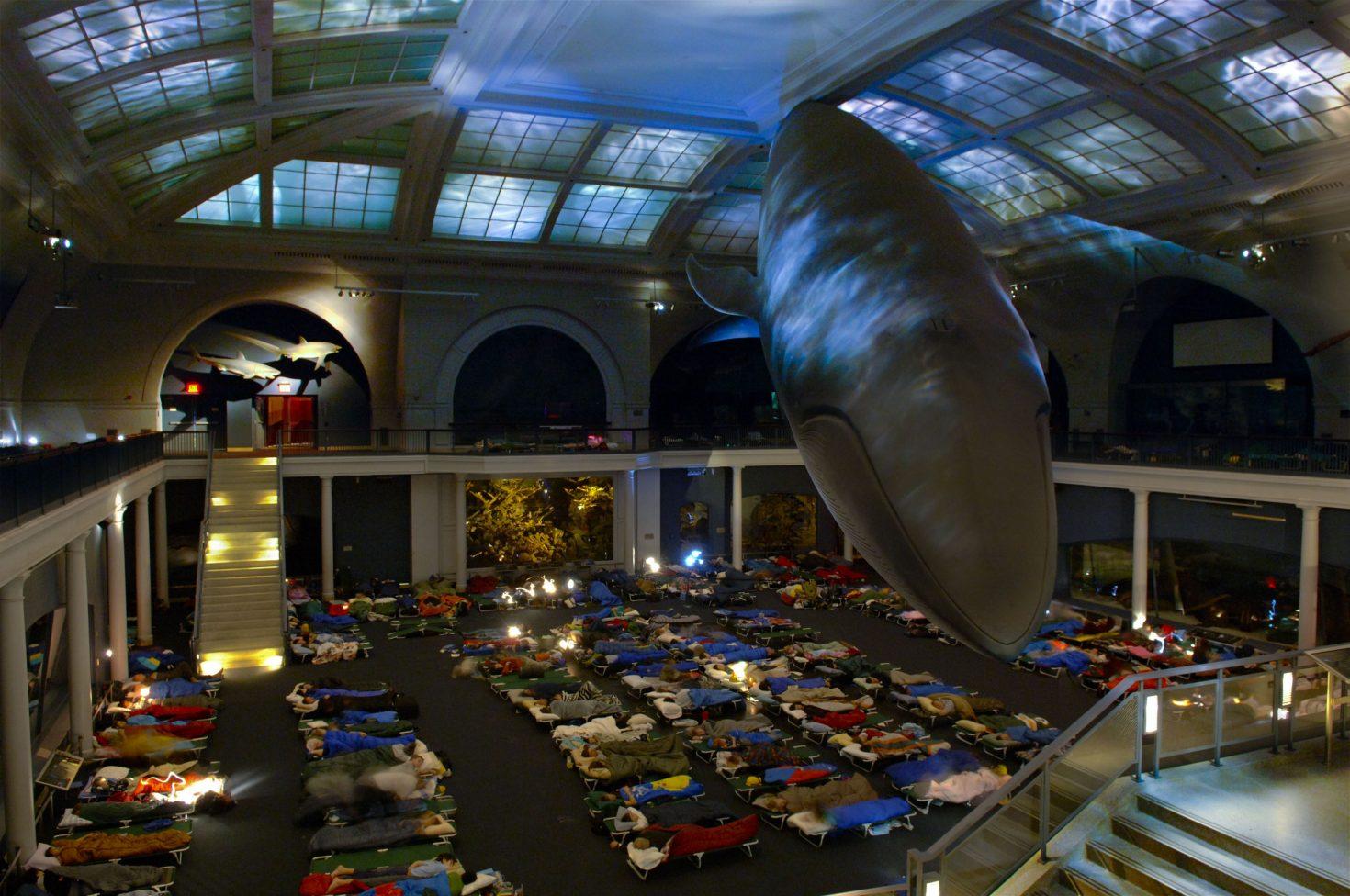 Американский музей приглашает провести ночь в одном зале с гигантским голубым китом.Вокруг Света. Украина