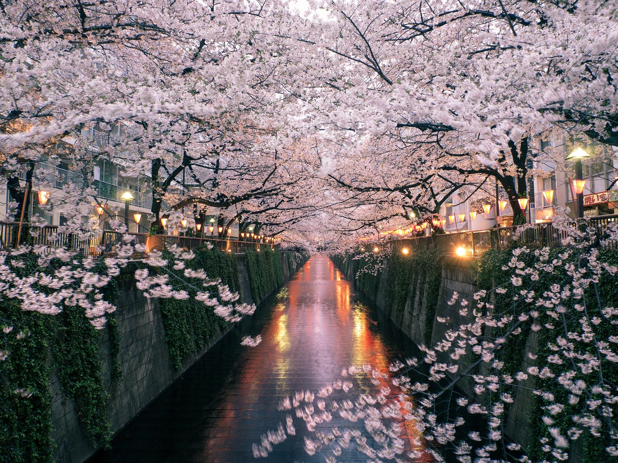 8 райских мест для любителей цветов