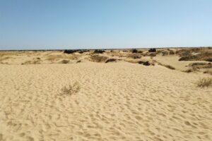 Пустыня в Украине: Олешковские пески
