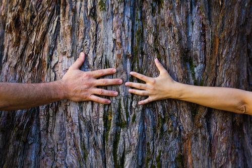 В Индии установили новый рекорд Гиннесса по объятиям с деревьями