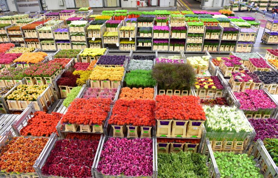 dutch flower auction Aalsmeer flower auction, aalsmeer 16k likes aalsmeer flower auction is a flower auction that takes place in aalsmeer, netherlands it is the largest.