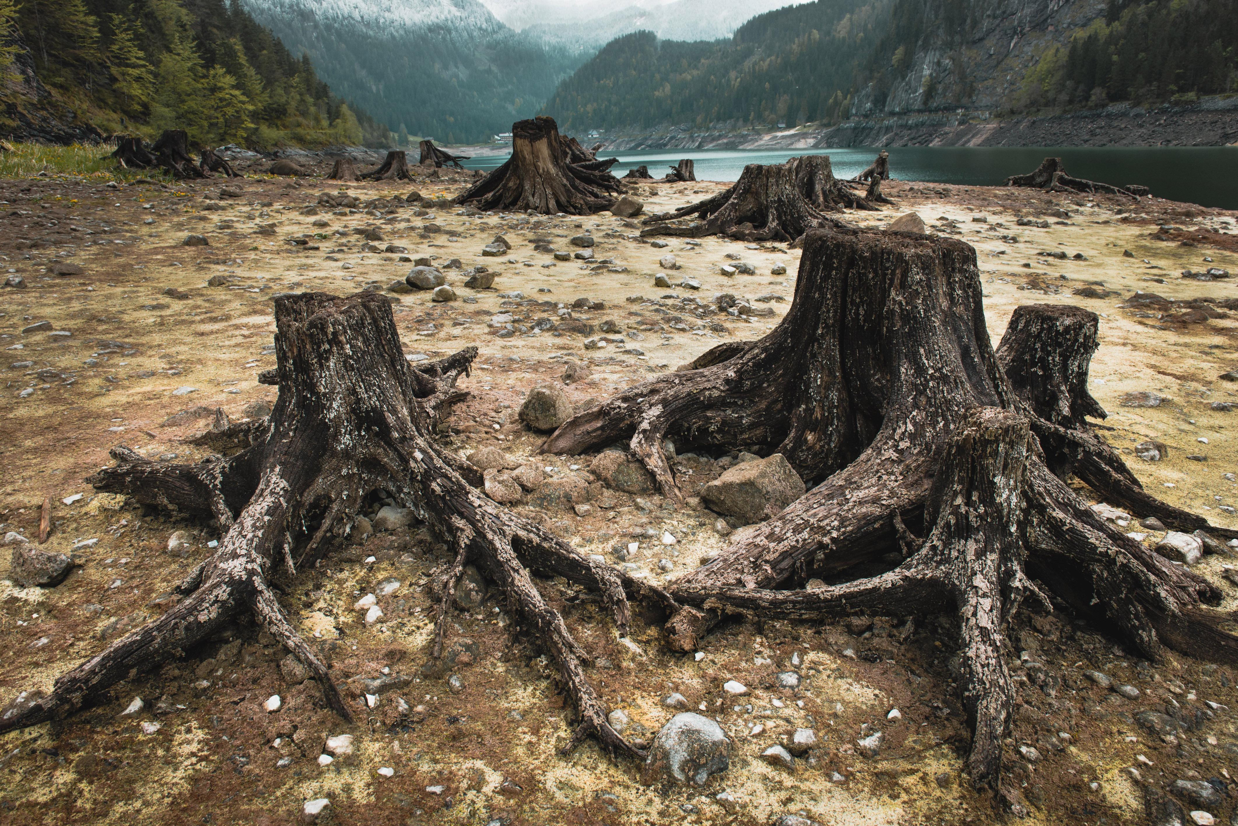 Половине объектов дикой природы ЮНЕСКО угрожает уничтожение