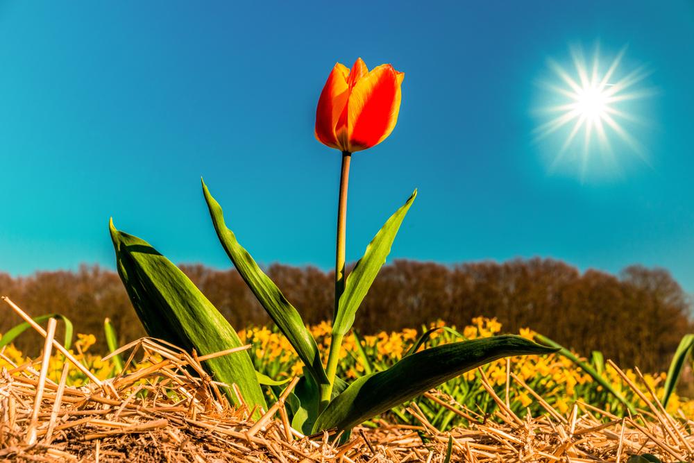 8 интересных фактов о весне.Вокруг Света. Украина