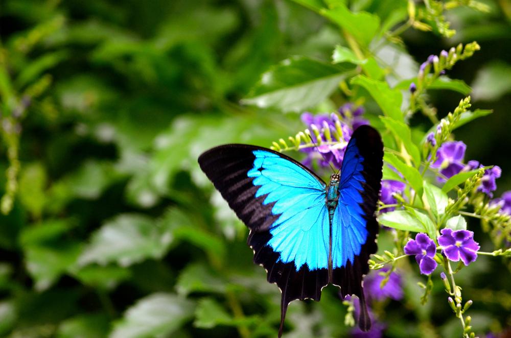 Интересные факты о бабочках.Вокруг Света. Украина