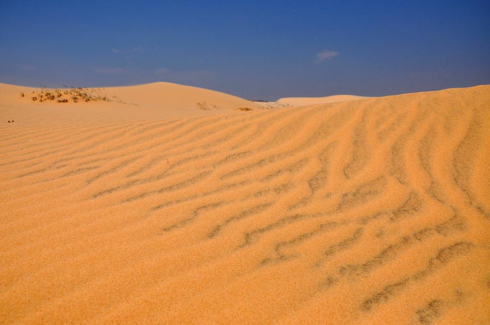 Посреди Сахары появятся фермы по выращиванию овощей и злаков