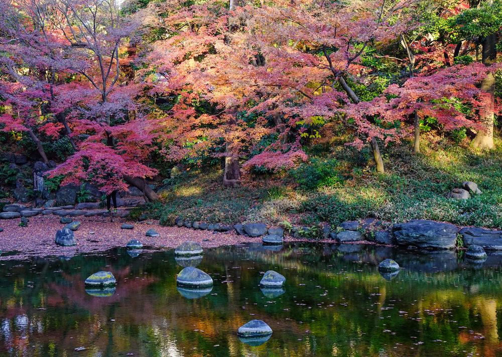 В киевском ботаническом саду «устроят» весну с японскими мотивами