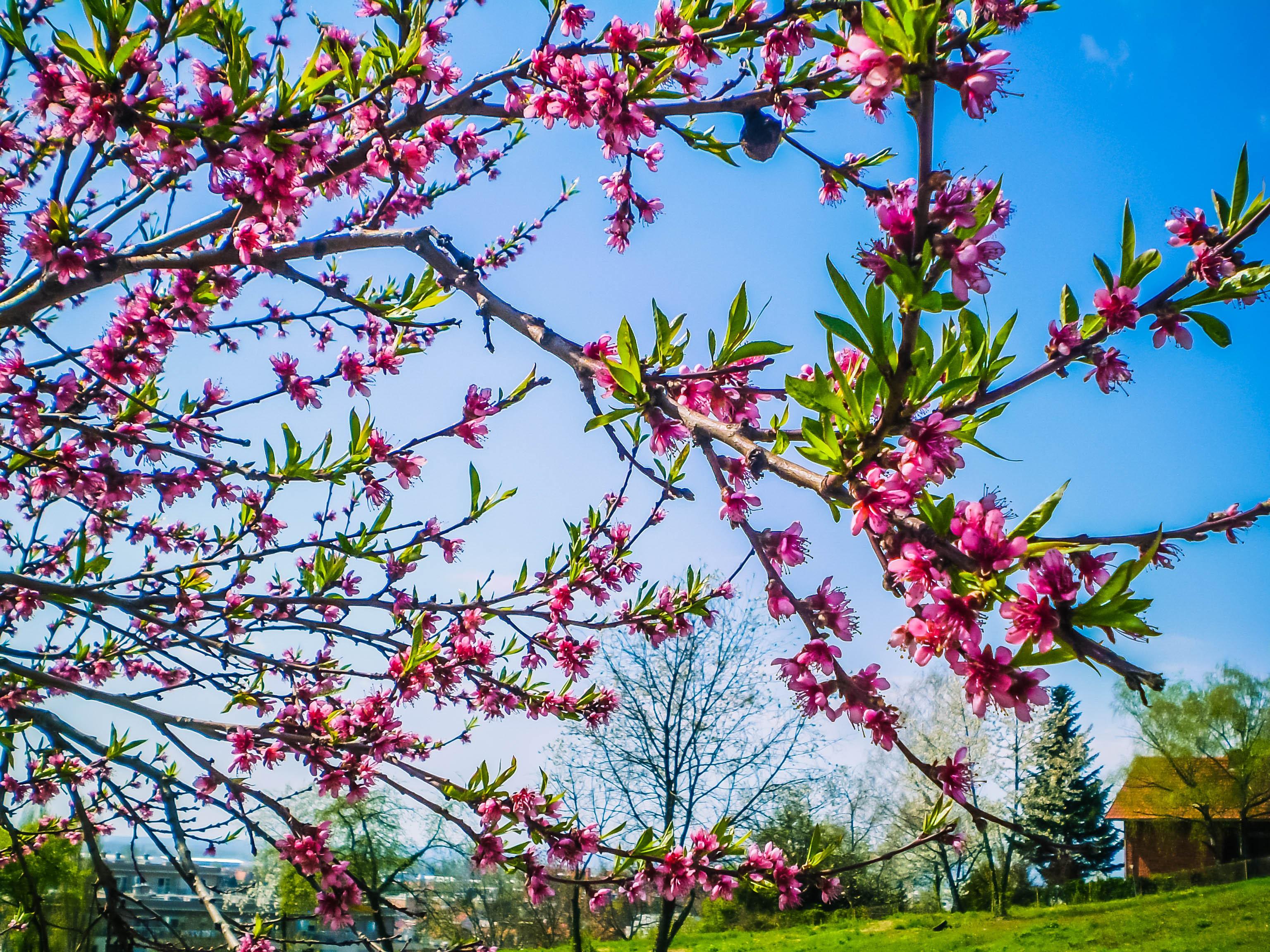 Когда-нибудь мы станем цветами: шведские ученые создали новый метод захоронения умерших.Вокруг Света. Украина