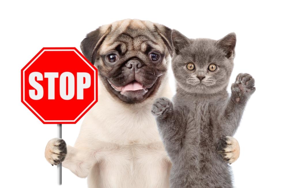 На Тайване запретили есть собак и кошек.Вокруг Света. Украина