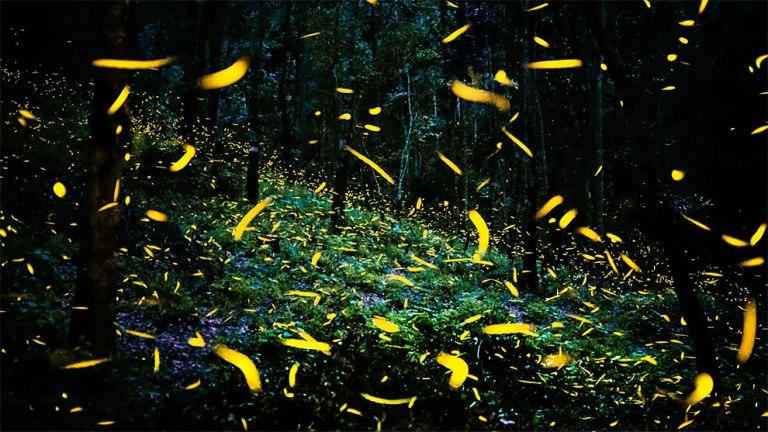 Сказочный лес светлячков в Мексике