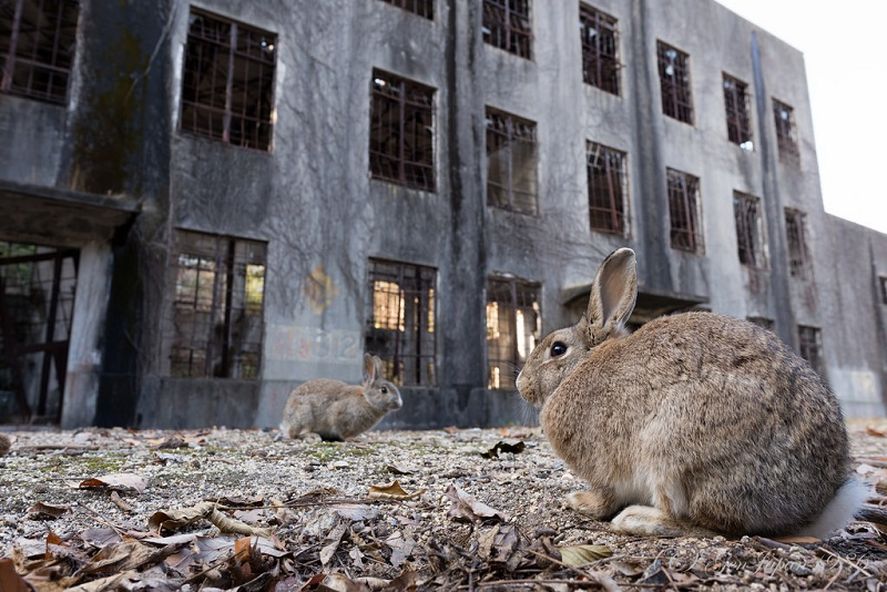 Как остров, на котором производили химическое оружие, стал раем для кроликов
