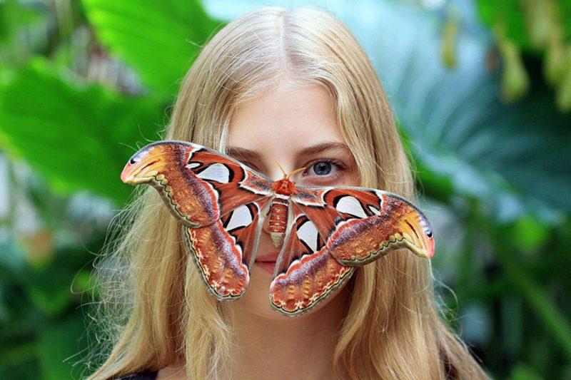 Самые красивые и удивительные бабочки Земли