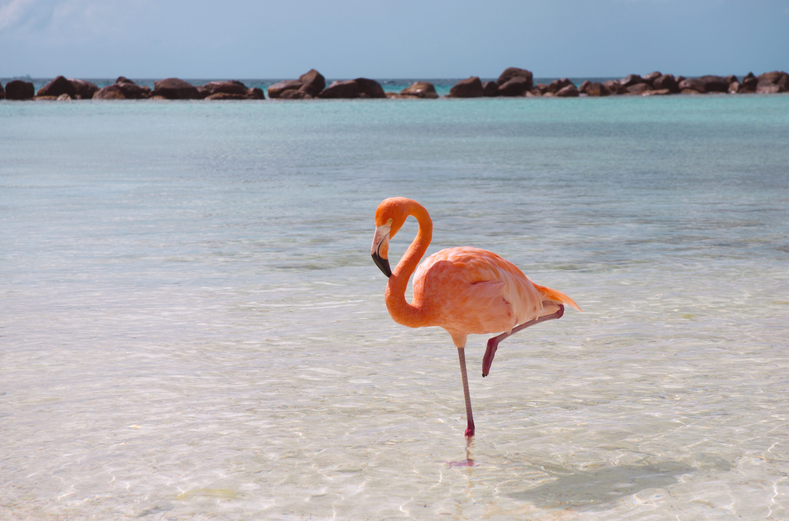 Почему фламинго стоят на одной ноге?