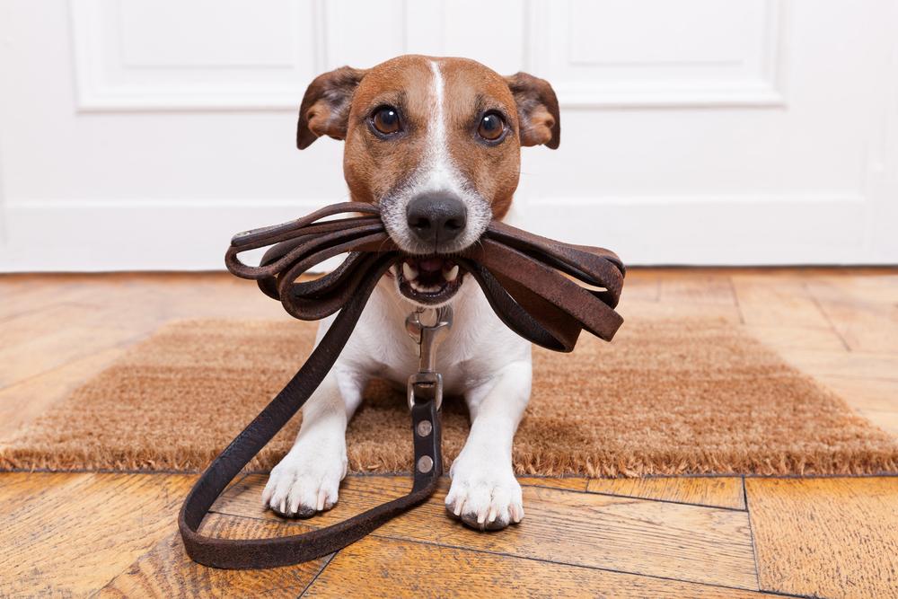Собаки, созданные для хорошего настроения.Вокруг Света. Украина