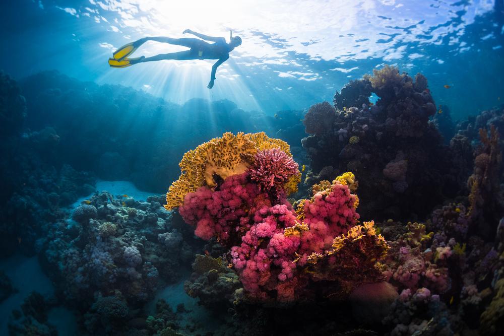 «Голубая» мечта дайвера: 5 лучших мест в мире для подводных «прогулок»