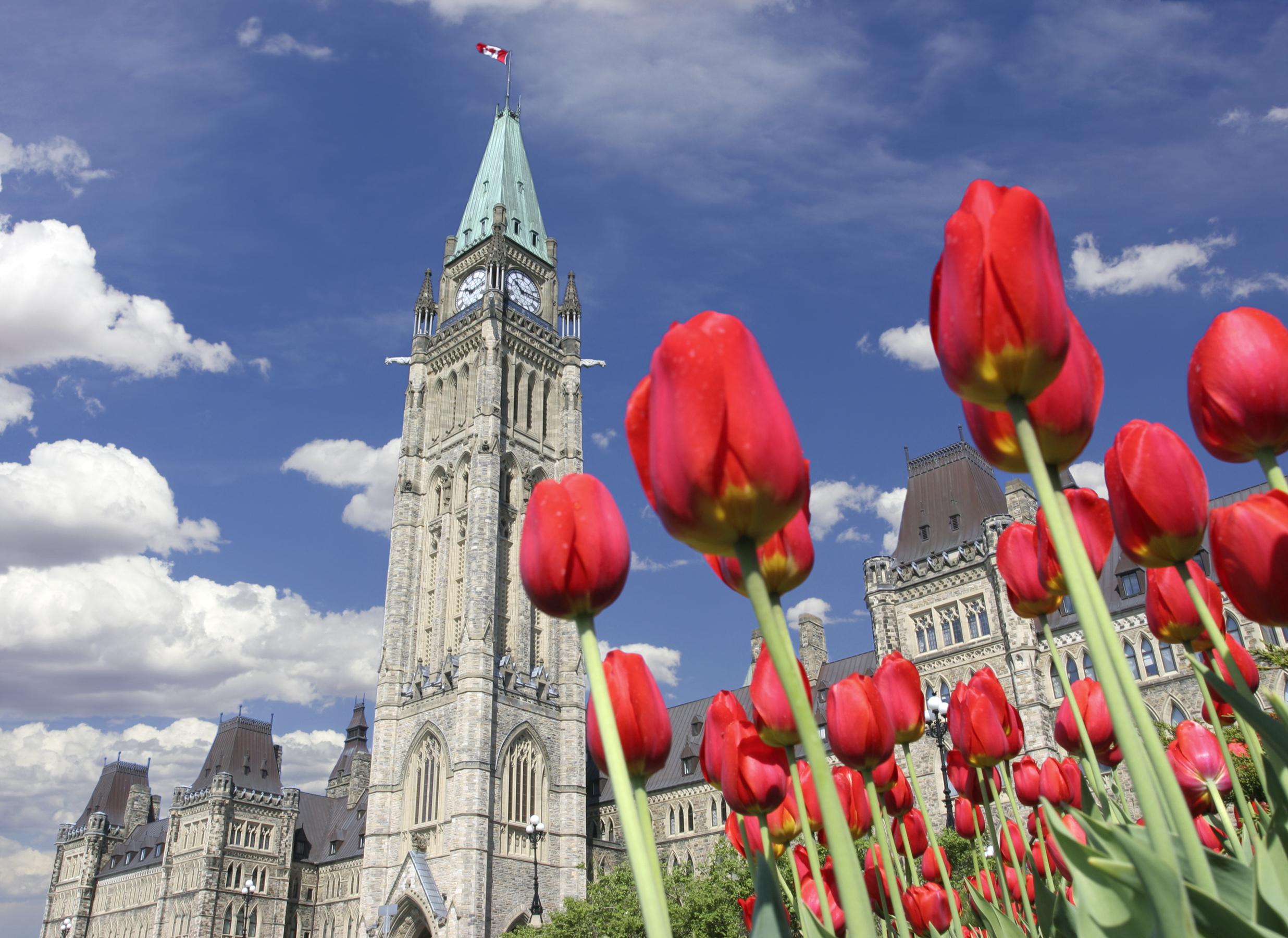 За что голландцы каждую весну присылают в Канаду по 20 тысяч луковиц тюльпанов