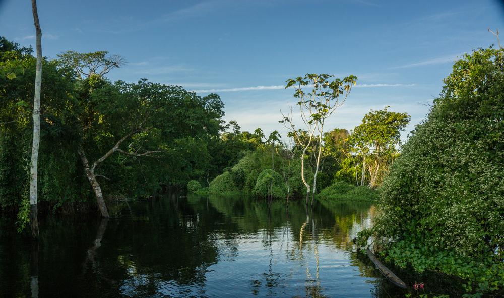Самые жуткие и опасные обитатели Амазонки