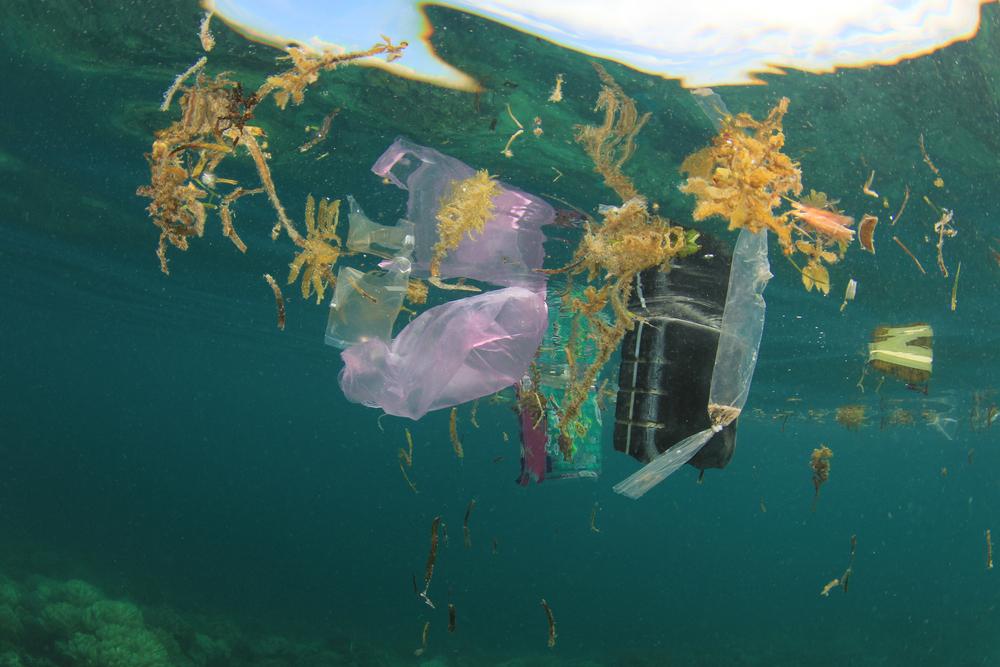 Неизвестные микробы разлагают пластик в океане.Вокруг Света. Украина