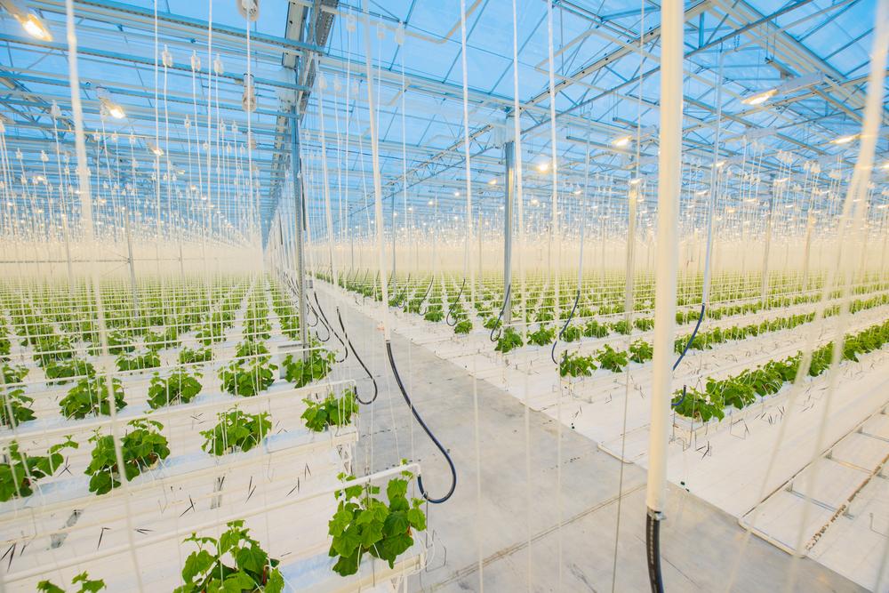 В Японии роботы самостоятельно будут выращивать салат