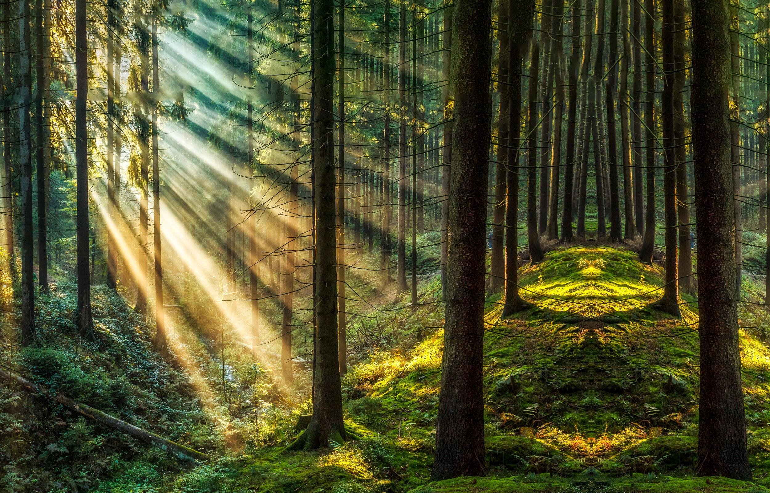 Ученые обнаружили миллионы гектаров «затерянных» лесов
