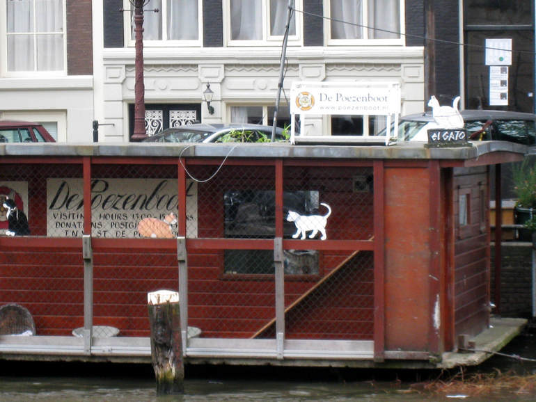 De Poezenboot: единственное в мире плавучее «общежитие» для кошек