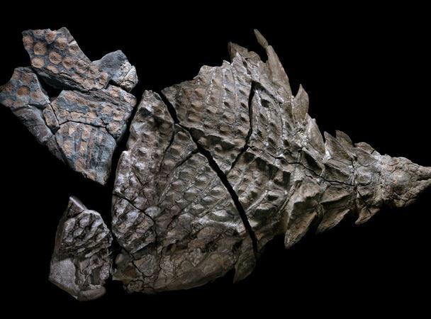 Картинки по запросу Нодозавр, фото нодозавр