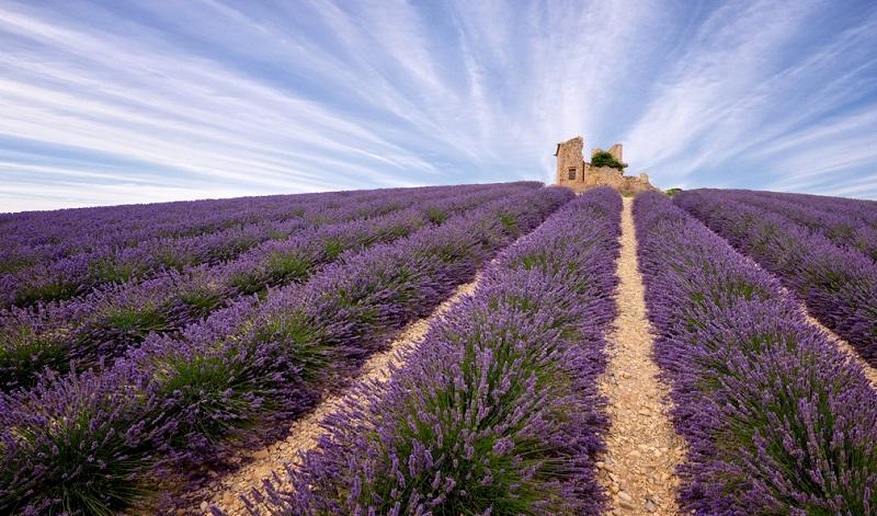 В Провансе начинается цветение сказочных лавандовых полей