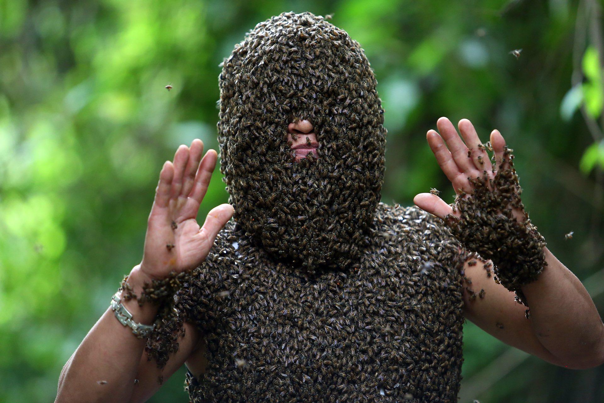 Абсолютный властелин пчел
