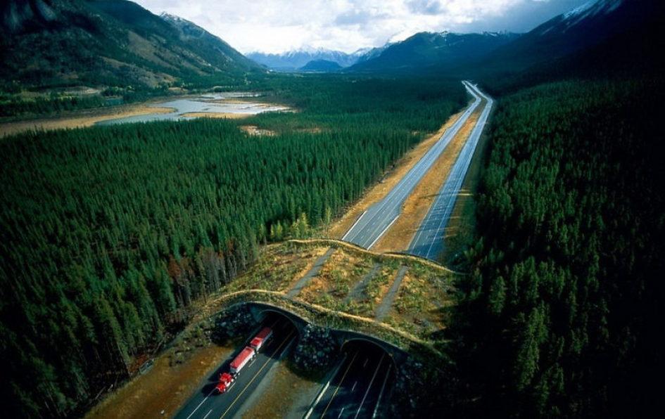 Дорога жизни: мосты и тоннели, созданные специально для животных
