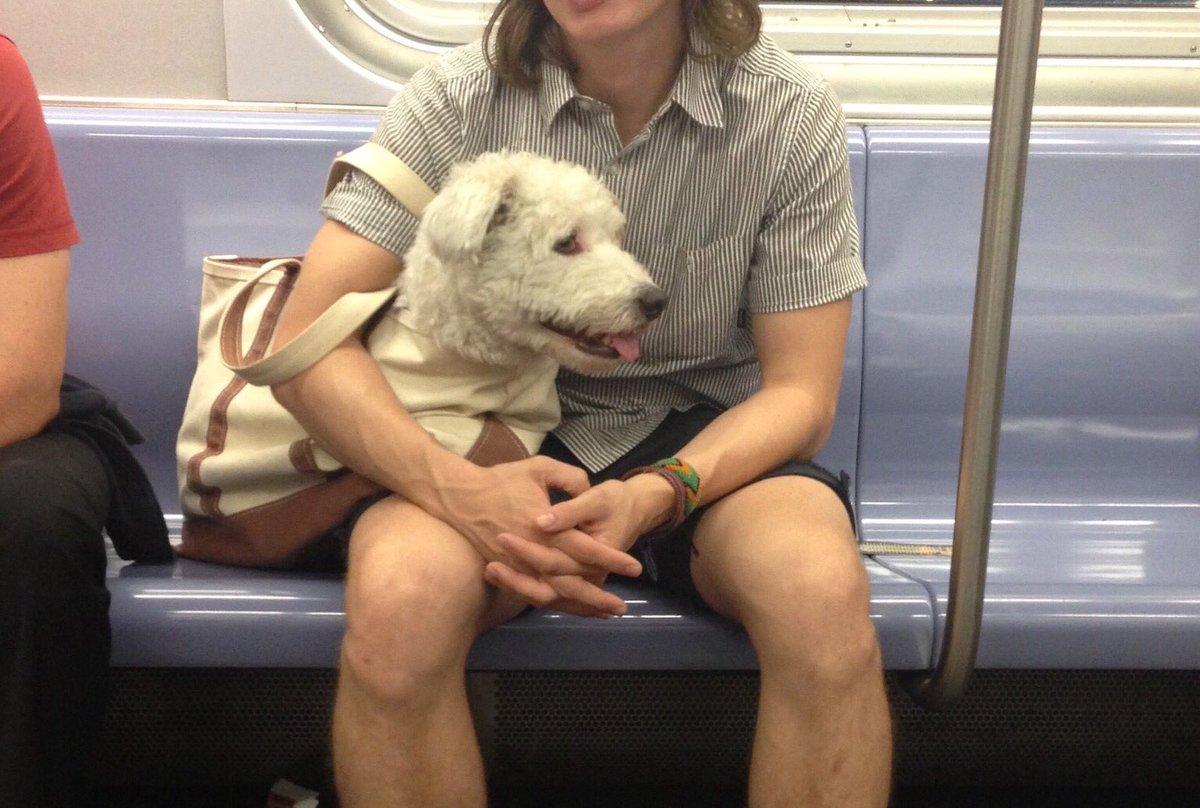 В метро Нью-Йорка собак можно перевозить только в сумке – получается весело.Вокруг Света. Украина