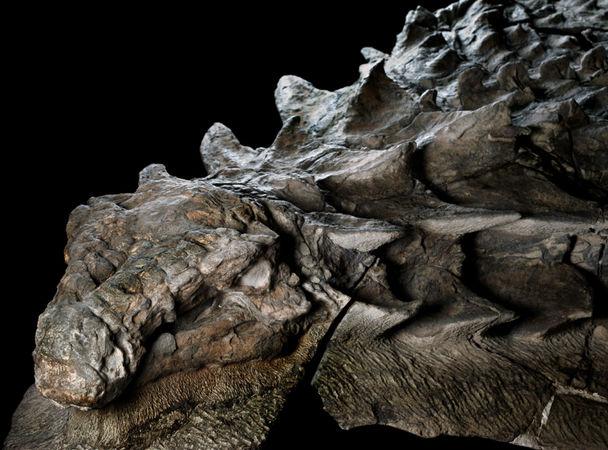 Нодозавр: одна из лучших окаменелостей динозавра за всю историю.Вокруг Света. Украина